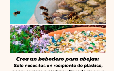CONSEJOS DE VERANO APIMEDICINA: BEBEDERO DE ABEJAS